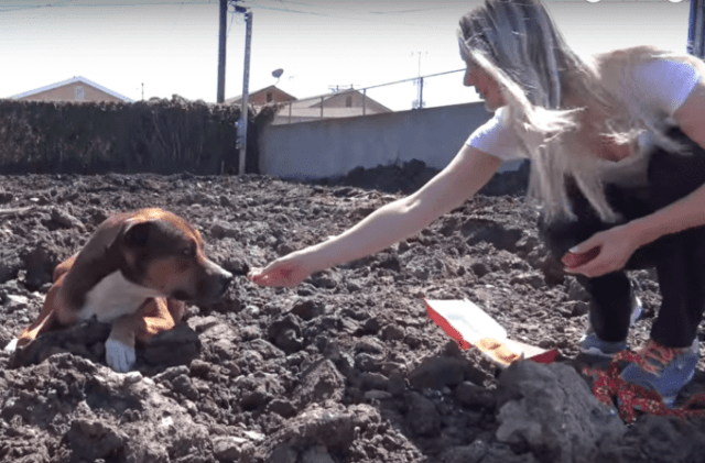 Rescue Dog Transforms From Fearful Stray To Carefree Cutie