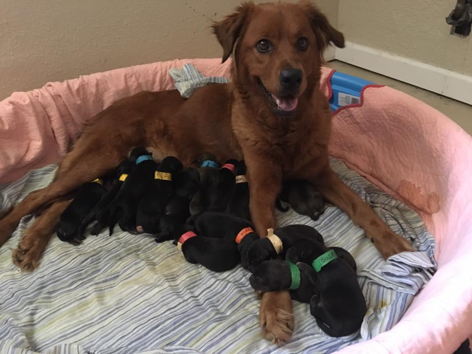 Dog Gives Birth To 18 Puppies Two Weeks After She Was Saved From Euthanasia