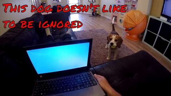 Funny dog doesn't like to be ignored