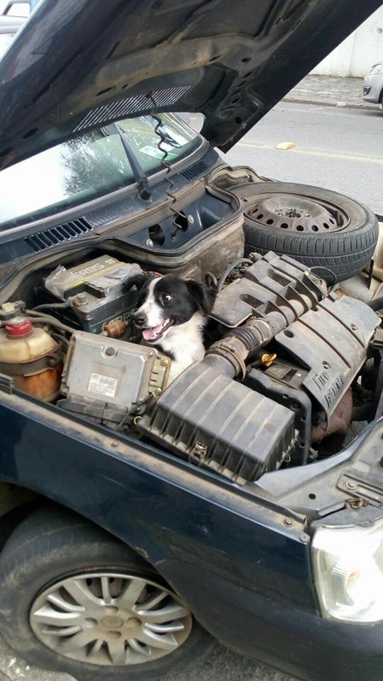 Woman looks under hood after car breaks down, sees dog smiling back at her