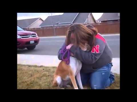 Adoptive family doesn't show up for dog, then foster mom realizes she was set up