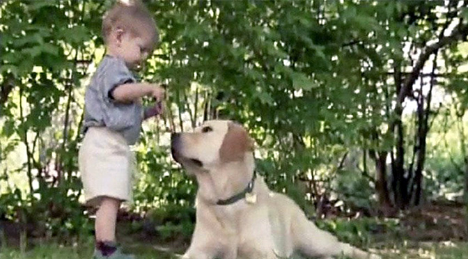 Video of Incredible Bond between Boy and Dog Leads to Inspiring Story Years Later