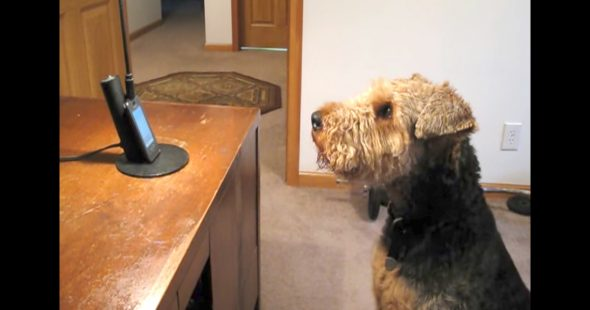 Stanley Was Missing His Mom, So His Dad Set Up a Phone Call, and It's the Cutest Thing We've Ever Seen