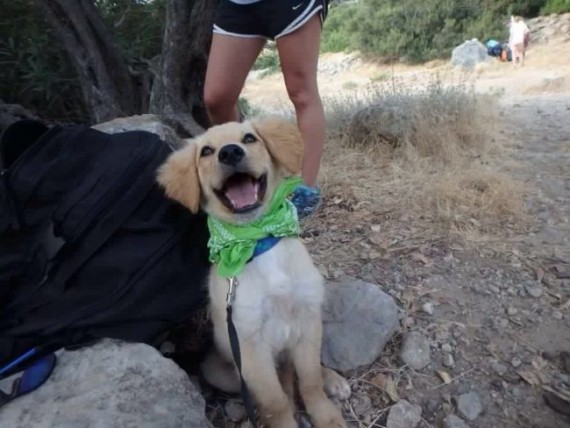 They just rescued a dog from the shelter, and its reaction is amazing