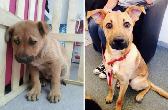 15 shelter animals who were just adopted show their wonderful 'after' faces
