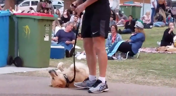 Dog Plays Dead So She Wouldn't Have To Leave Park, And It's Hilarious