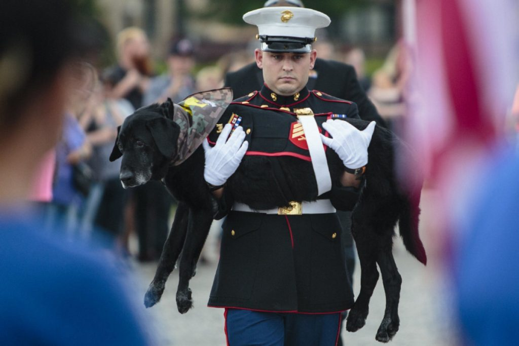 Marine wanted to give a proper farewell to the battle buddy who was more than just a dog