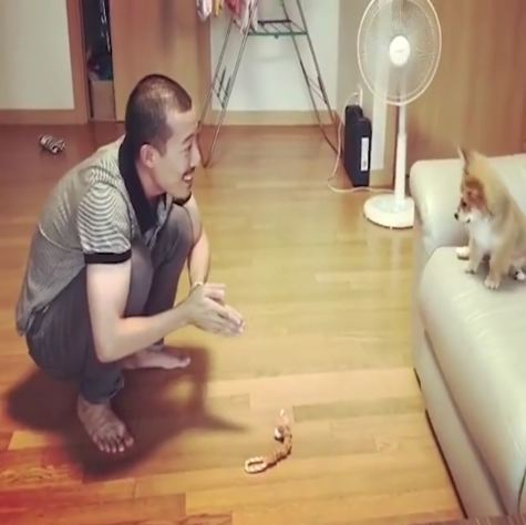 Dad teaches tiny puppy how to jump off of the sofa
