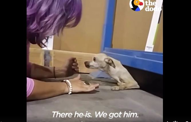 Dog got a forever home but missed his foster mom too much — so he ran away