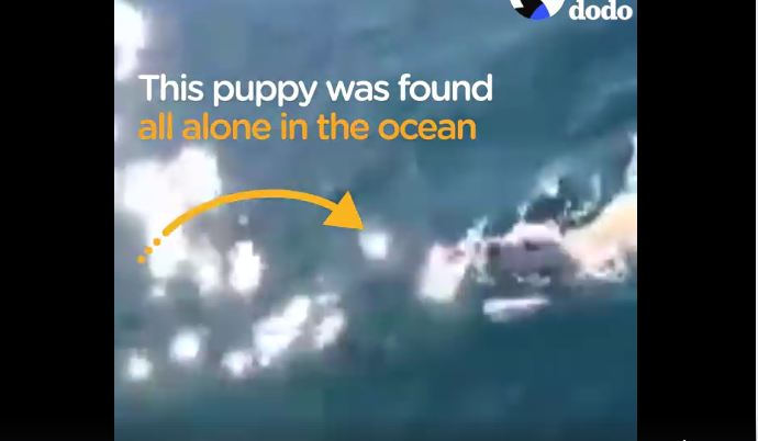 Puppy found swimming all alone in the middle of the ocean