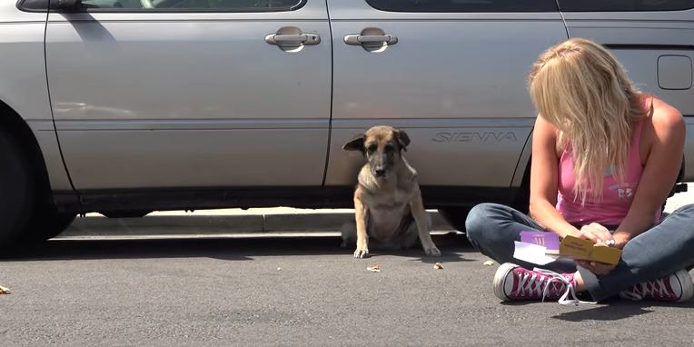 Senior German Shepherd was ready to leave her lonely life on the streets when they showed up