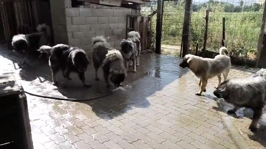 Dog Play with Water