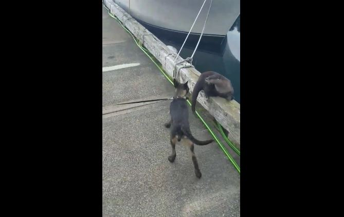 When Puppy Met Otter: Watch The Magic Happen Between These Unlikely Pals