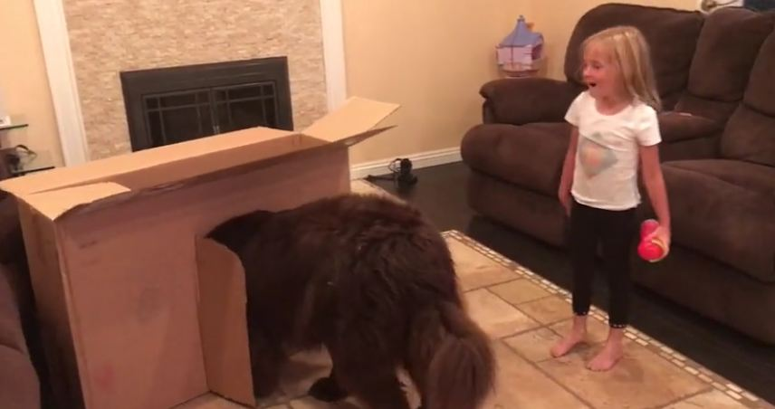Dog is too big for little girl's playhouse