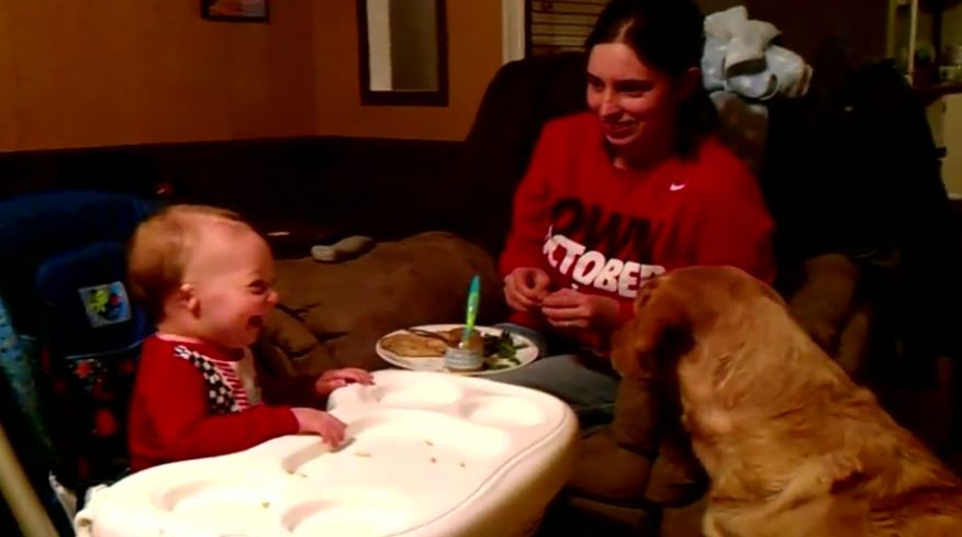 Dog Tries To Convince Baby That Green Beans Are Good, Has Baby In Stitches