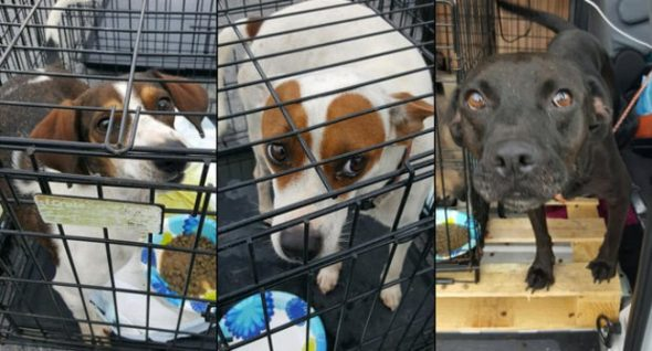 Helping Pets Survive Harvey: Displaced Animals Sent to NJ for Adoption