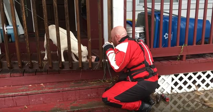 Pets Are Left Stranded In Floodwaters, But This Rescue Team Is Stepping Up In A Big Way