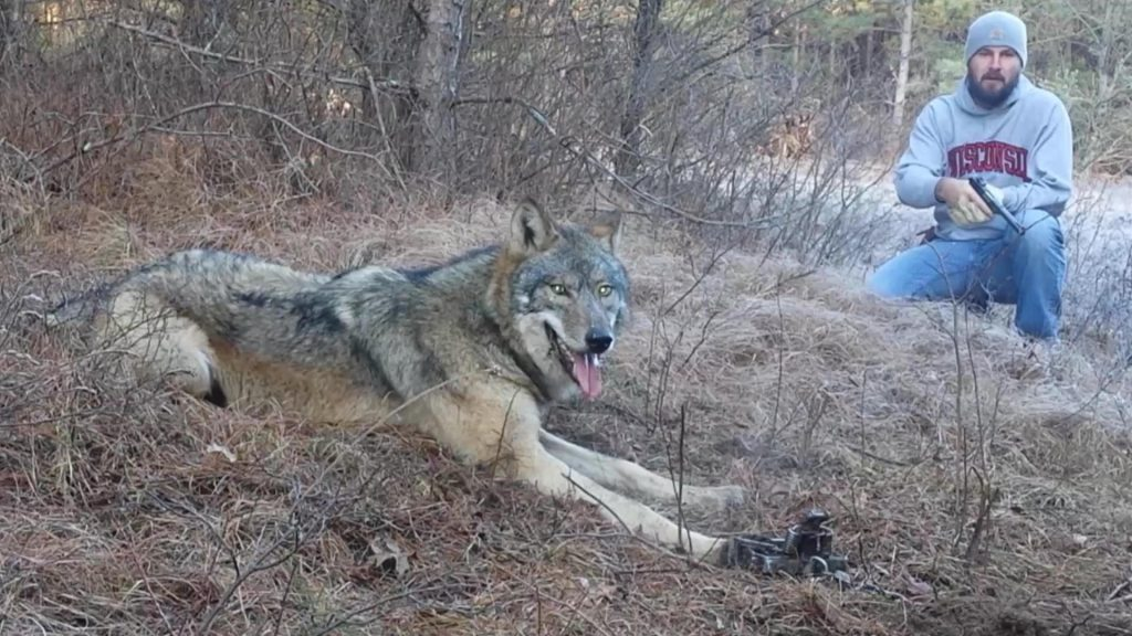 Man comes across a huge wolf in the woods but realizes the truth as he closes in
