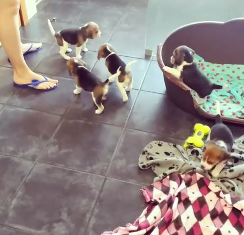 Wiggly Puppies Just Won't Stay Put in Adorable Little Video