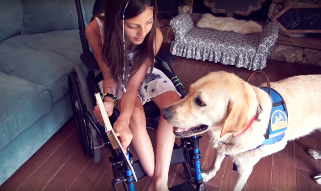 Loving Assistance Dog Helps Young Girl Who Can't Stand On Her Own Conquer Everyday Life