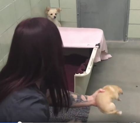 The Moment This Anxious Mama Sees Her Puppies Again Is Indescribable….