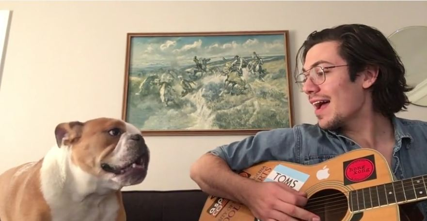 Winston the Bulldog sings during owner's guitar session