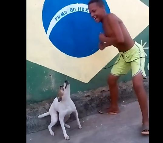 So You Think You Can Dance? So Can This Dog!
