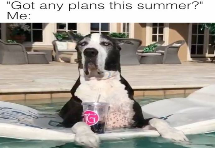 Pool Cool: Great Dane Wins At Summer