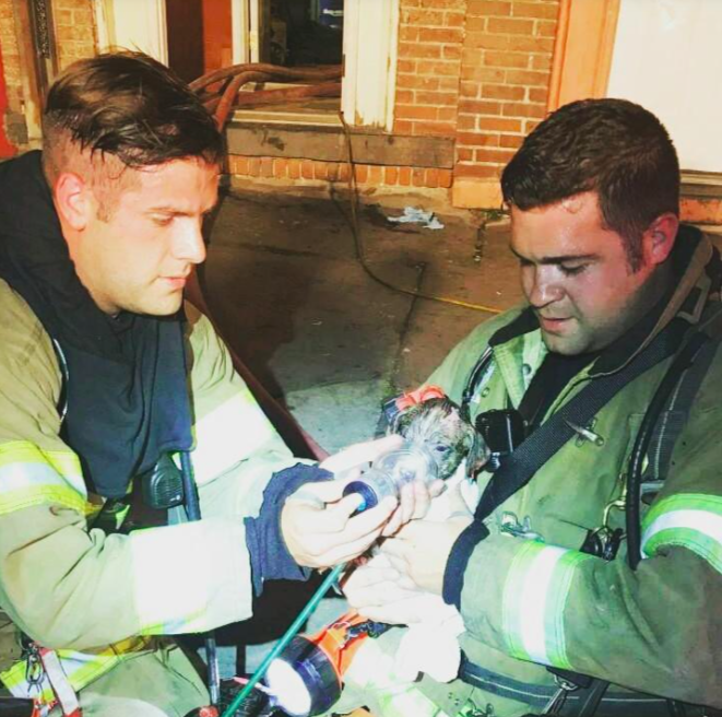 Brave Firefighters Rescue Injured Puppy From A Burning Building, Then Give Him The Best Gift Of All