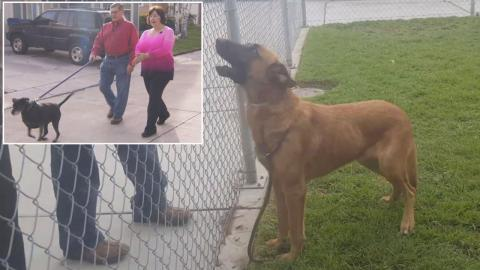 Dog Sadly Watched His Family Adopting Another One At Shelter, Now Finds A New Home