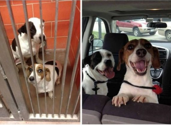 15 heartwarming pictures snapped before and after animals were adopted