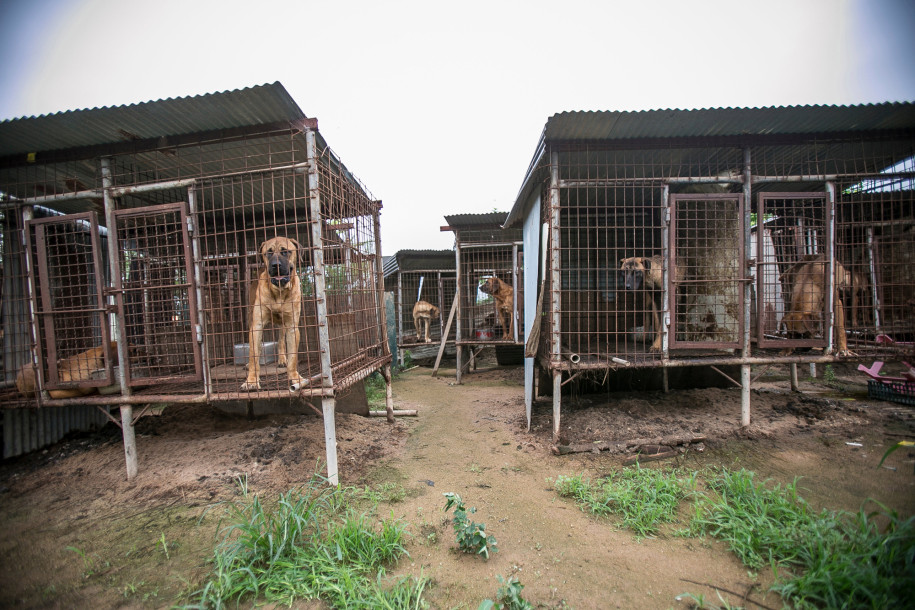 Humane Society International Saved 149 Dogs From The Meat Trade