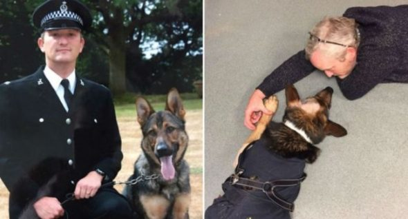 Guide Dog Pup Named For Hero Police Dog Who's Now Enjoying Retired Life