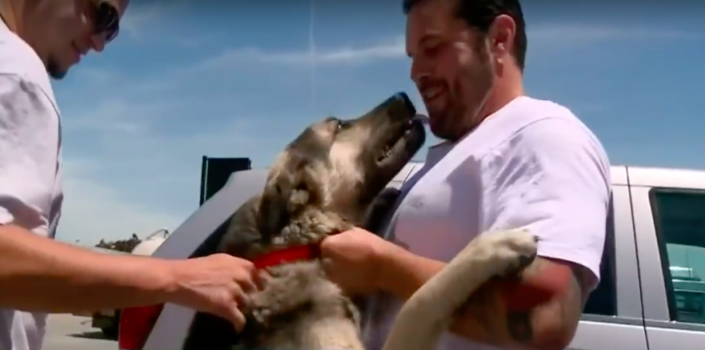 Soldier Joyfully Reunites With Dog Who He Formed Special Bond With In Iraq, Adopts Him As His Own
