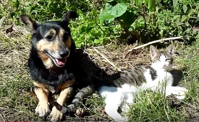 Stray kitten is found on side of the road and saved by dogs
