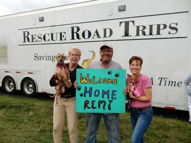 3 Amazing Stories of Mass Rescues From High-Kill Shelters