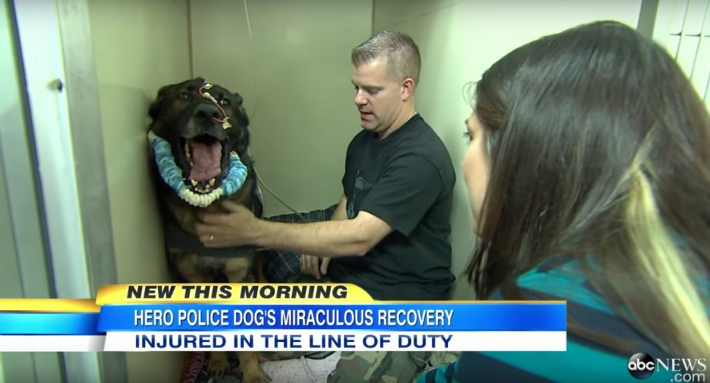 Police dog is shot in the line of duty, has priceless reaction when he reunites with cop