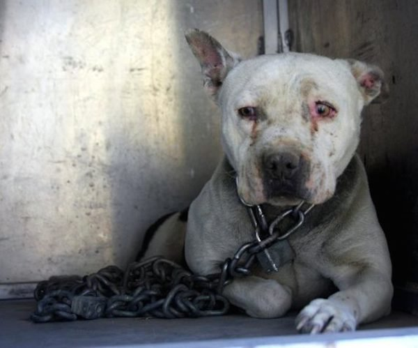 Dog Who Had Spent Years With Heavy Chain Around Her Neck Has Adorable 'Superpower'