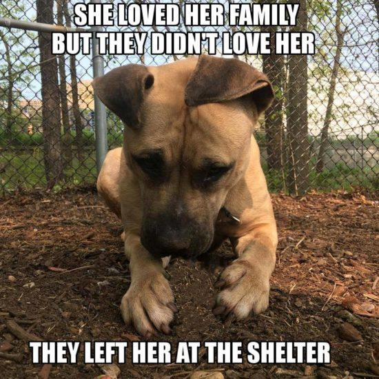 Forgotten: When new puppy arrived, Bella was tossed in the shelter