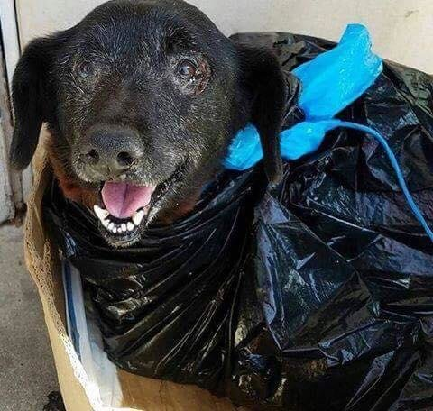 Hey, Join Your Friends On PMG! Dog's Dropped Off At Shelter In A Garbage Bag Because Owners Didn't Want Blood In Their Car