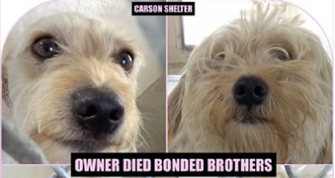 Bonded dogs at busy animal control after death of their owner