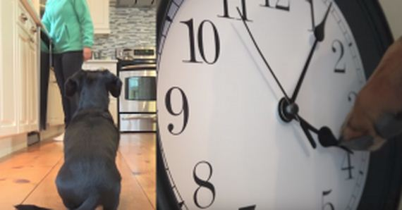 The Dog's Hungry, But It's Only 4PM — So He Takes Matters Into His Own Paws
