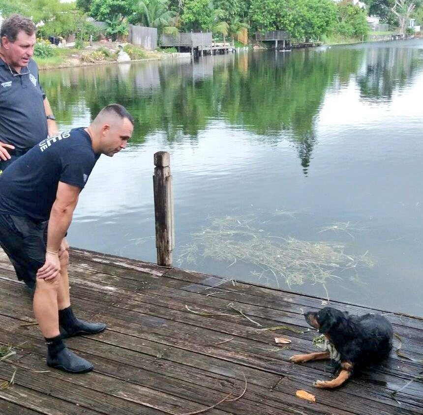 Firefighters jump in to save drowning dog from canal just before Hurricane Irma