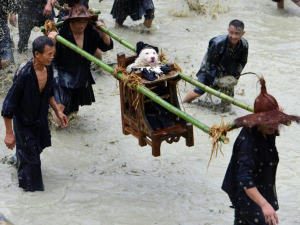 Annual China village 'Dog Carrying Day' worships a pup as a god
