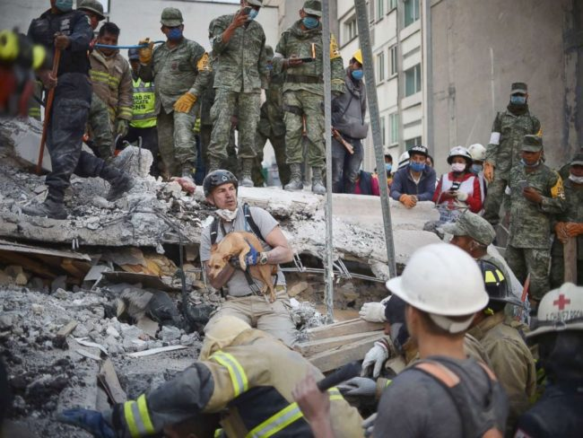 Dog trapped in Mexico City earthquake pulled to safety scared but unhurt