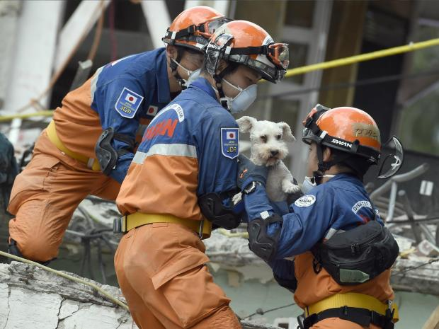 Dog Rescued From Quake Debris Inspires Hope in Mexico City