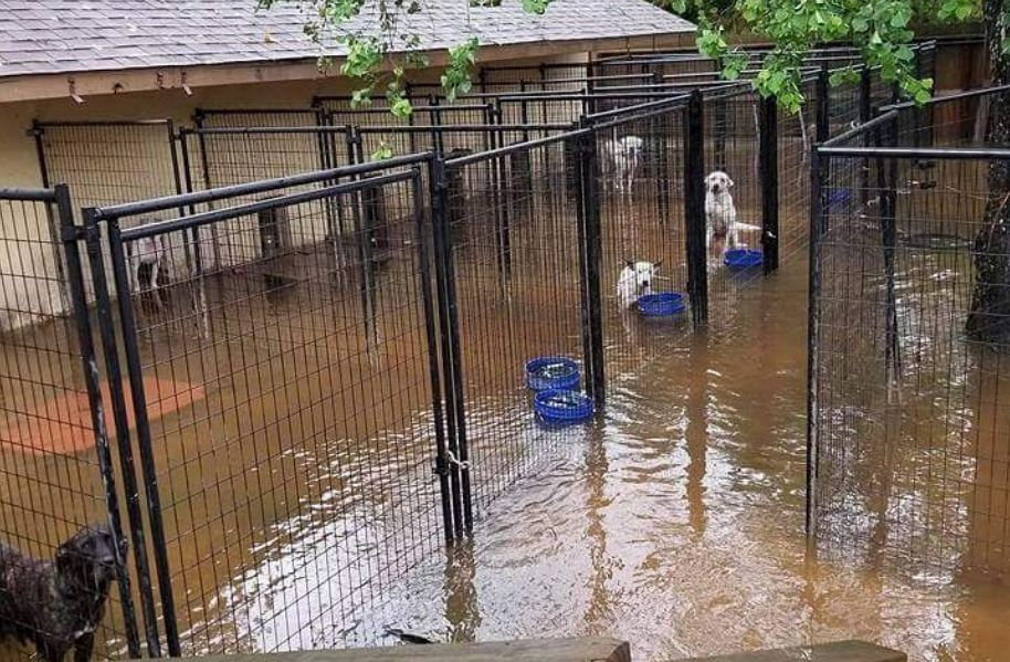 5 Ways To Help Dogs Affected By Hurricane Harvey Even If You Don't Live In Texas