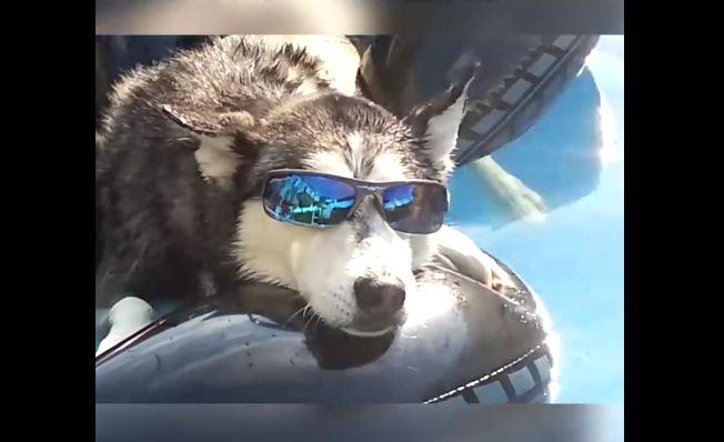 "Huskies Put the H in ""Ha! Ha!"""