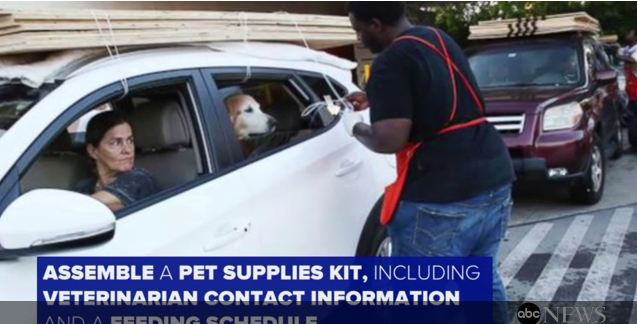How To Protect Pets During Hurricane Irma