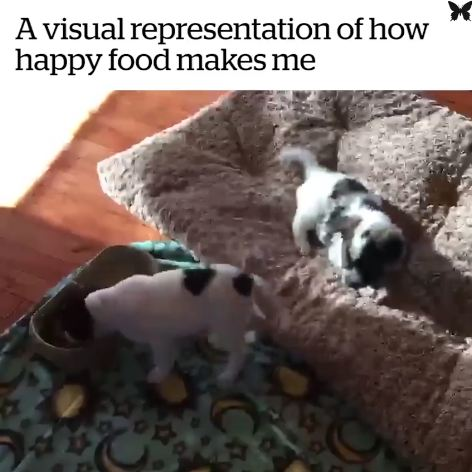 This Puppy's Mealtime Happy Dance Will Make Your Day!